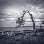 Jedno stablo, jedna klupa, Krk, Croatia 2016.