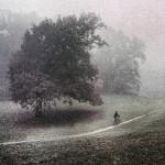 Jutro-bicikl-kolor