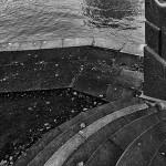 veslaci-NOVA-CB3